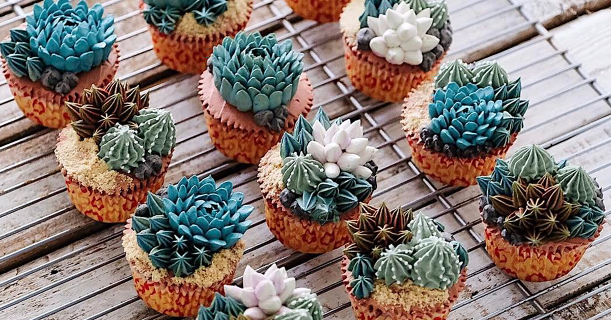 Cup Cakes Succulents