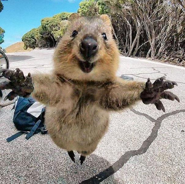 Gimme A Hug