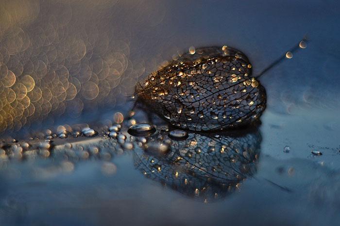 I Use Macro Lens To Capture Fragile Beauty Of Polish Nature