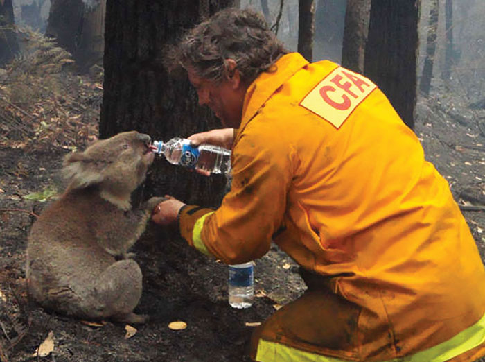 thirsty-koalas-drinking-stations-australia-4