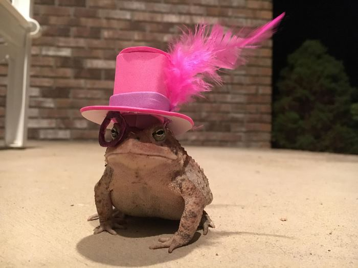 toad-tinny-hat-4