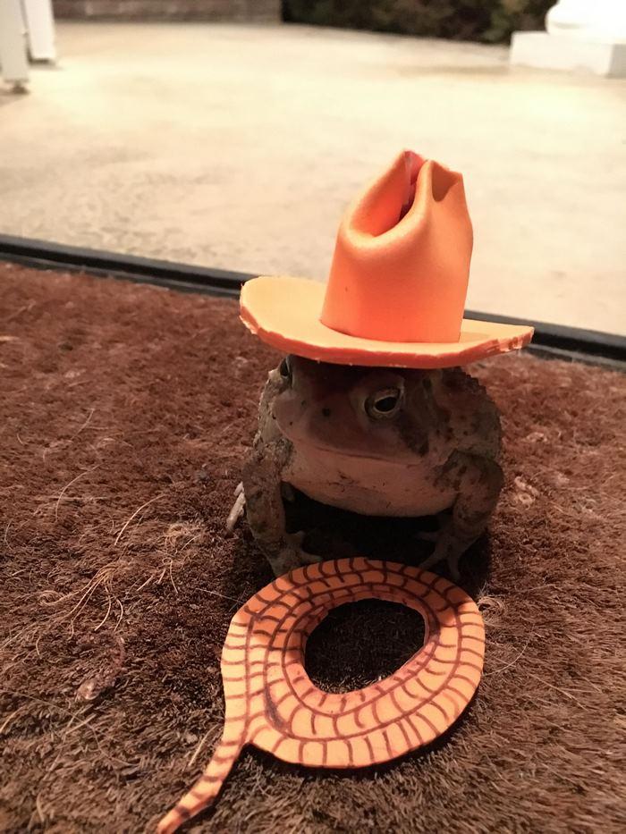 toad-tinny-hat-6