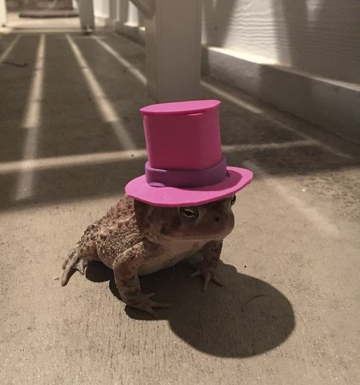 toad-tinny-hat-7