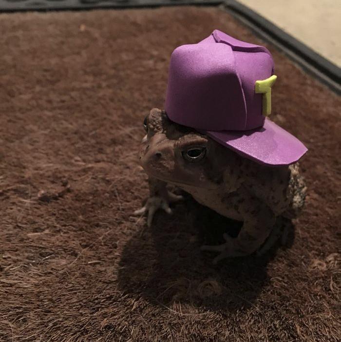 toad-tinny-hat-8