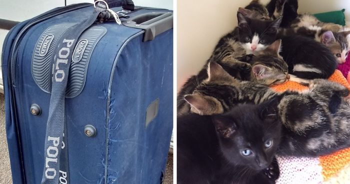 Woman Finds Old Suitcase On Train Tracks, Opens It And Discovers The Most Pawesome Thing Ever