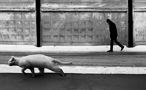 Fotografío el mundo secreto de los gatos callejeros en Kazajstán