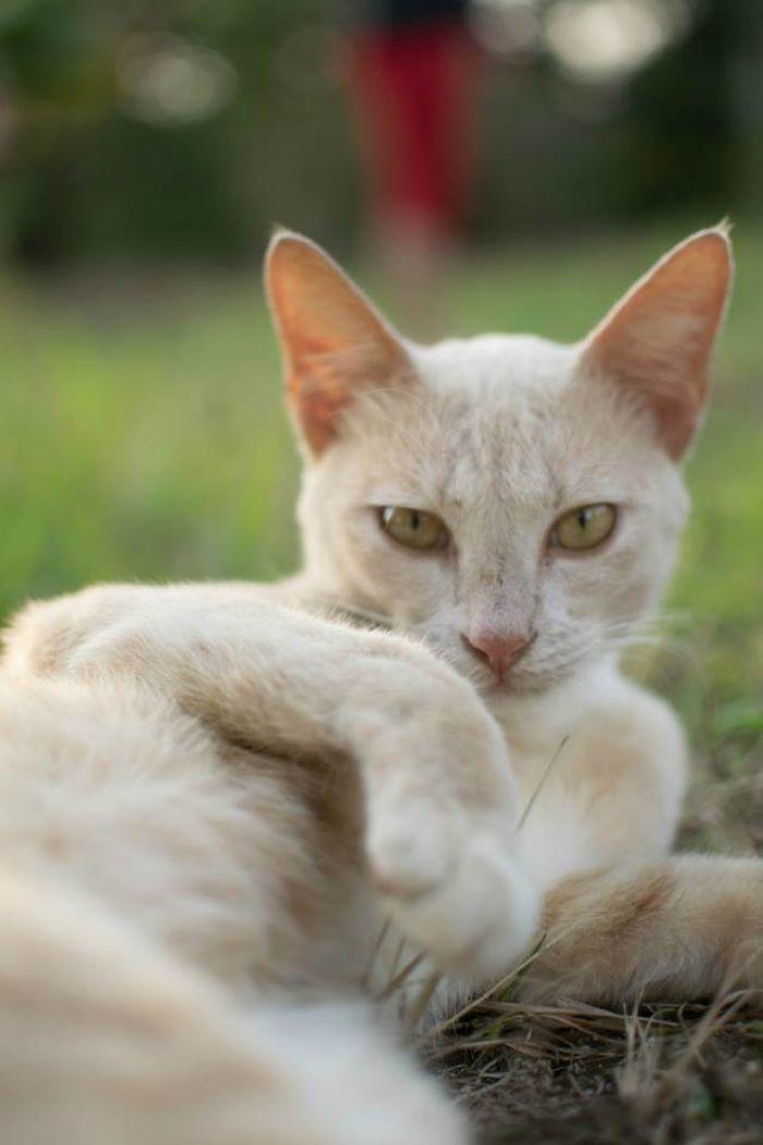 Seductive Cat Is Seductive.