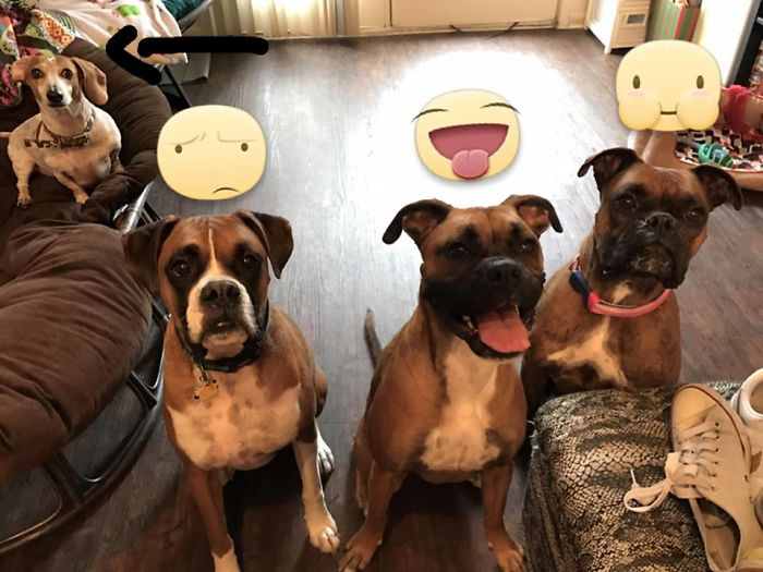 Three Boxers And Their Trainer