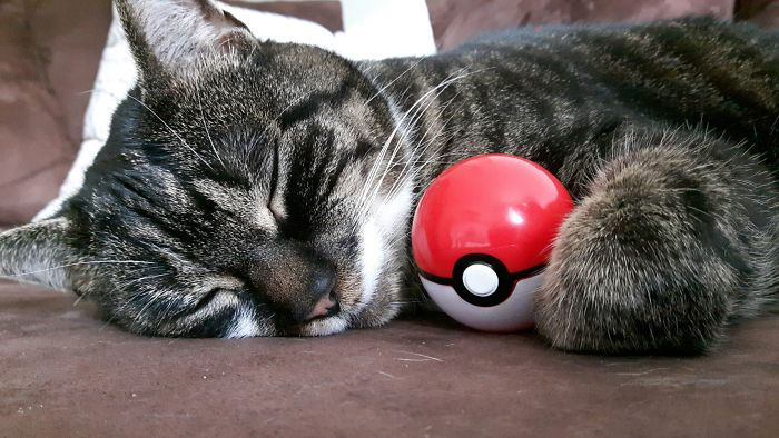 Meowth Refuses To Get Inside Its Pokéball