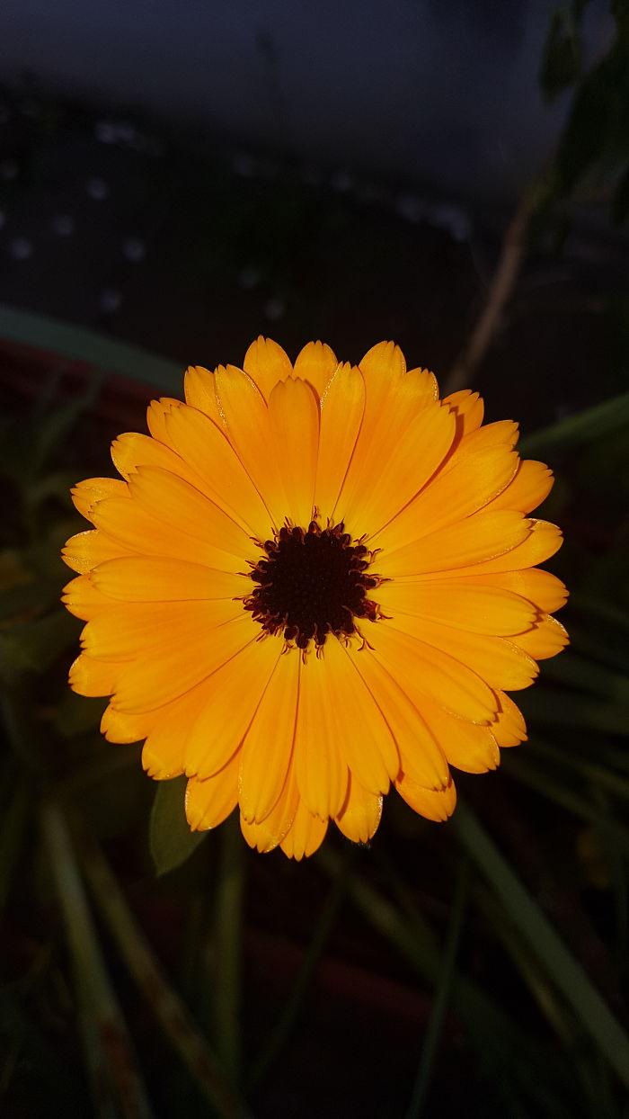 Around Flower