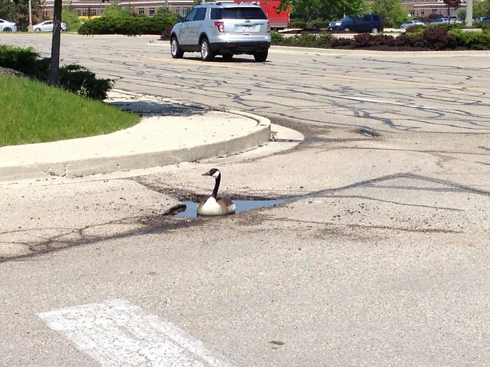 F*cks Given Level: Goose