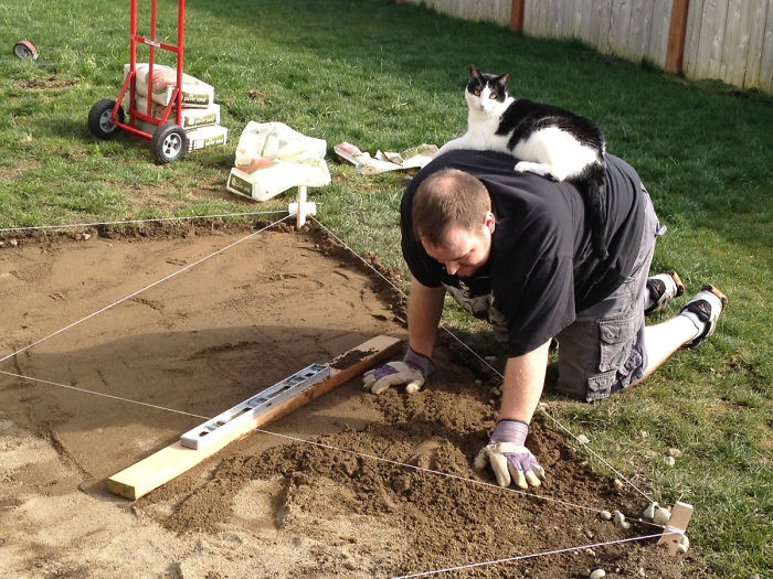 What's My Husband Doing? Leveling The Ground For Our New Hot Tub. What's The Cat Doing? Watching Us Build The Biggest Litter Box Ever