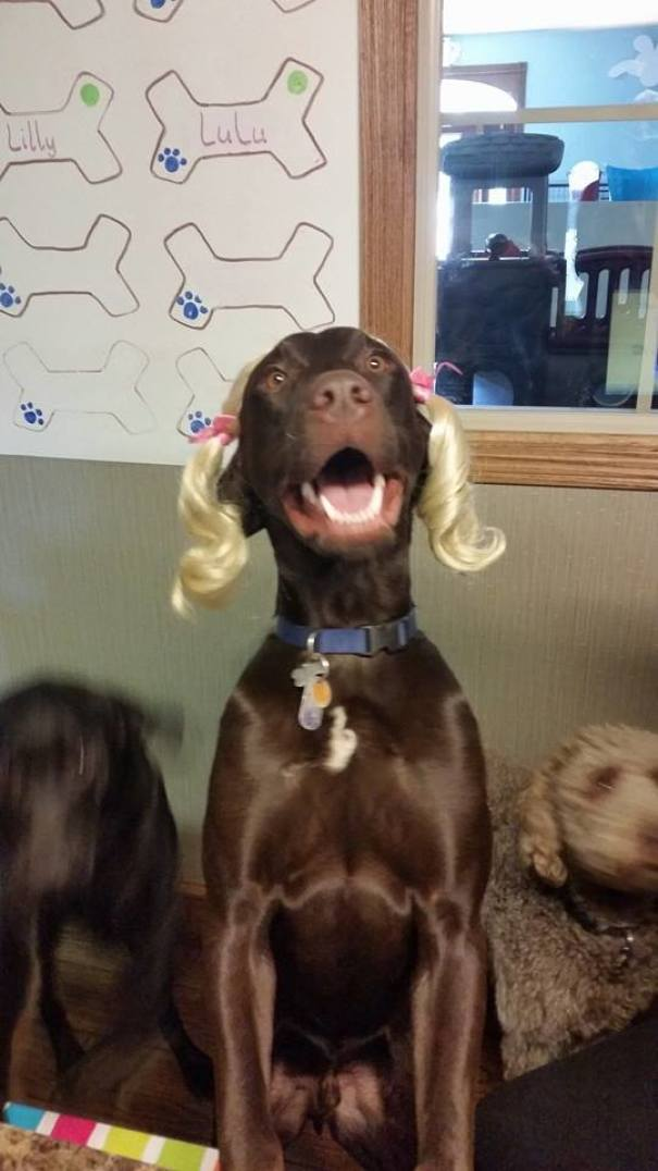 At My Daycare, Blondes Have More Fun