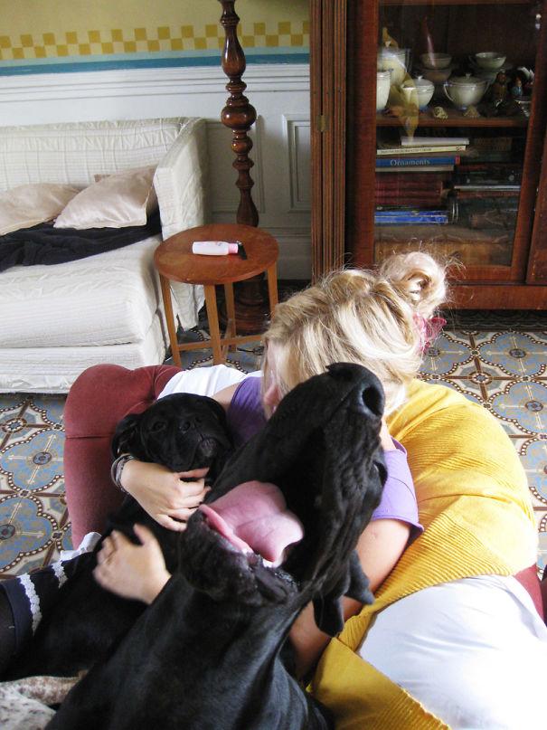 Funny Dog Photobombs