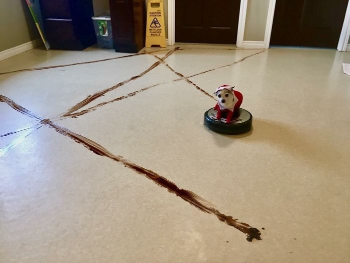 Local Doggie Daycare Learned A Valuable Lesson About Leaving A Roomba In The Reception Area