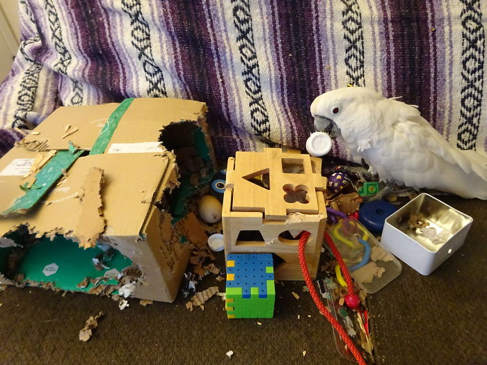 Cockatoo Couch Mess