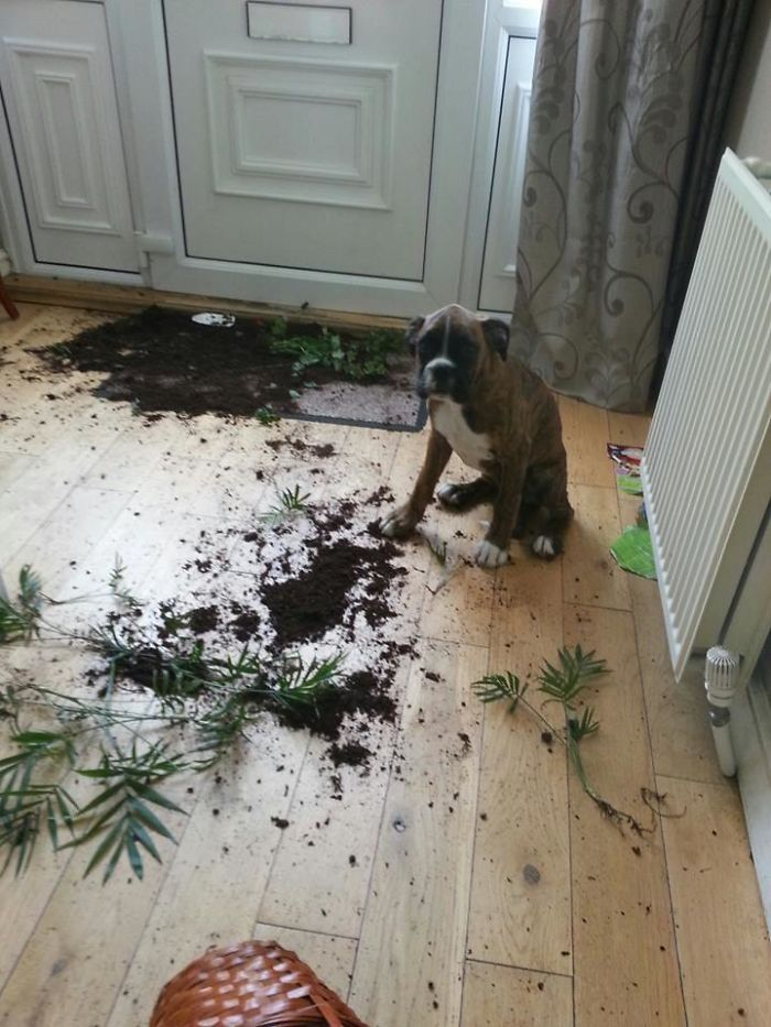 Friend Came Home To This Today. One Guilty Dog