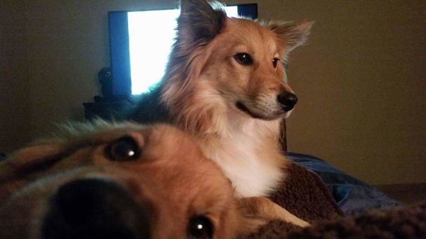 Funny Dog Photobombs