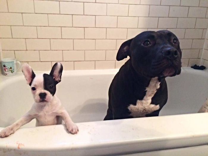 Bath Time For Two