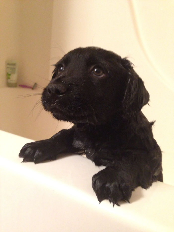 SO And I Got To Take Care Of A Two Puppies For A Few Weeks. Bear, Wasn't The Biggest Fan Of Bath Time