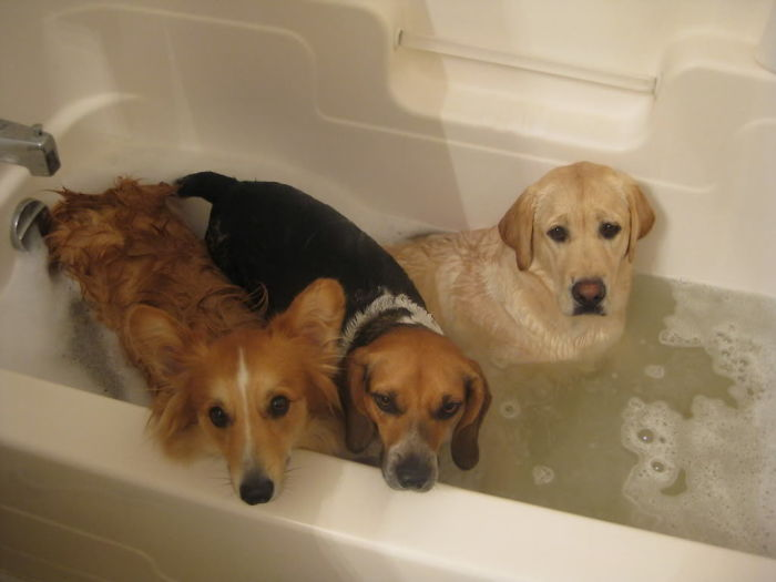 Three Different Reactions To Bath Time