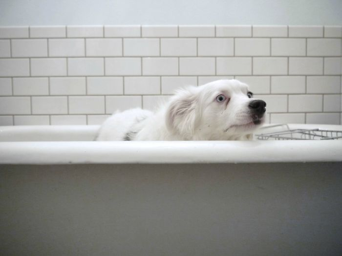 """My Dogs Best """"anything But A Bath!"""" Face"""