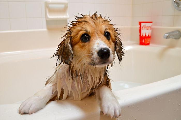 He Kinda Likes The Bath