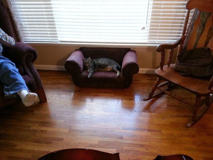 Tras beber compramos un sofá para el gato, pero resulta que le gusta