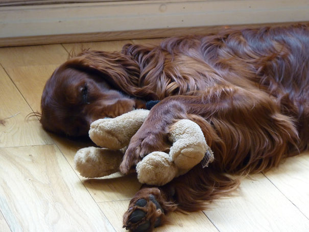 Logan Can't Fall Asleep Unless He Is Hugging His Stuffed Toy Puppy