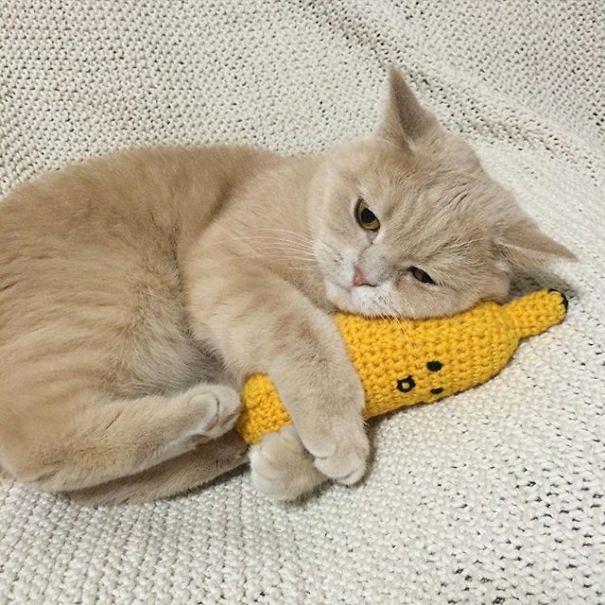 Kitten And His Banana Plush