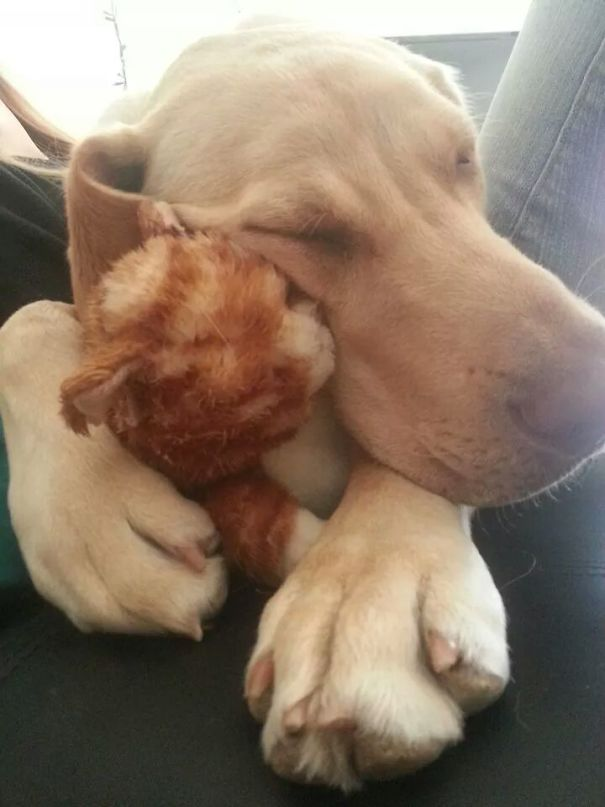 Just A Puppy And His Stuffed Kitten