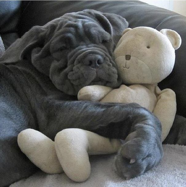 I Can't Sleep Without My Snuggle Bear!