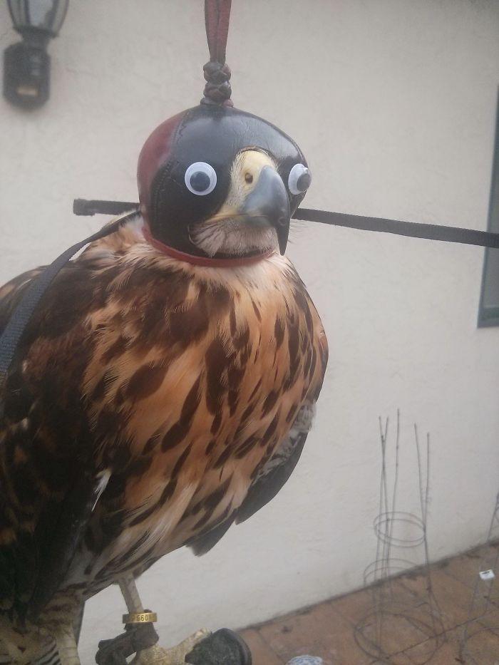 Una noble ave de prese