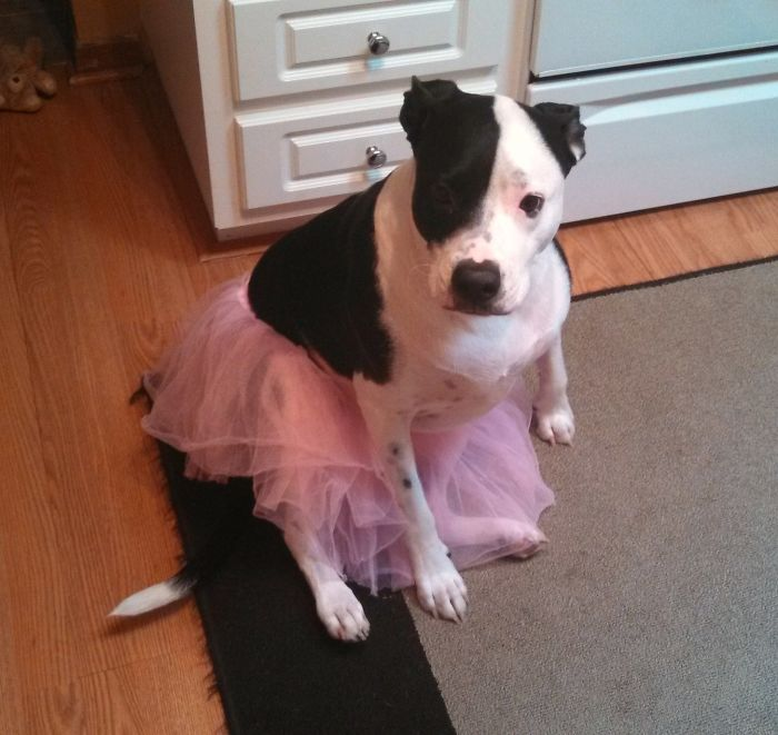 Mi sobrina está aprendiendo ballet y ahora el perro también