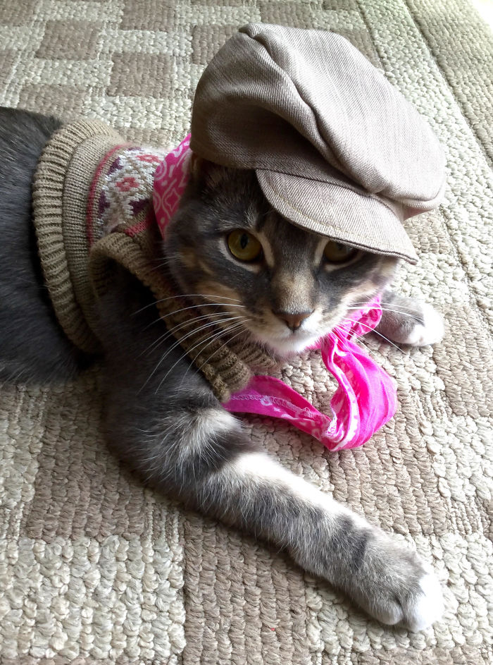 Le puso al gato la ropa de los peluches