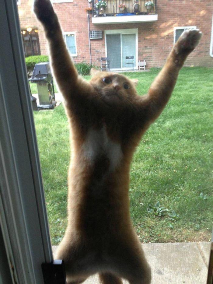 Déjame. Entrar. Por. Dios.