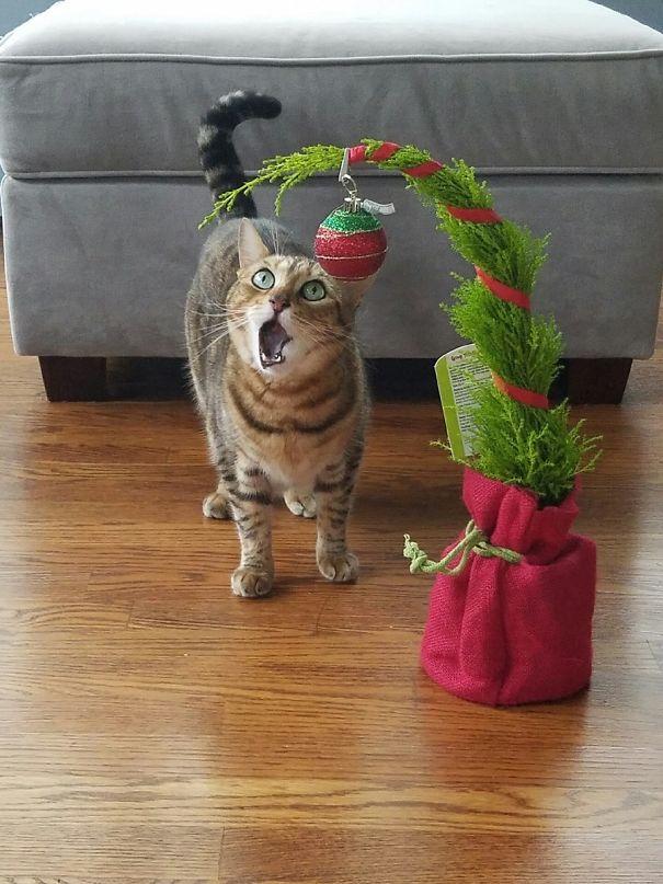 You Call This Christmas Tree??