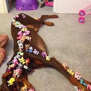 Patient Dog Vs Kids