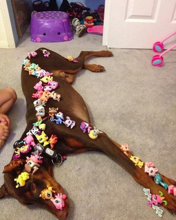 Perro paciente vs. niños