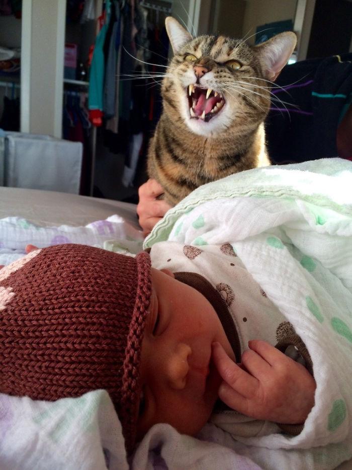 Le he presentado a mi gato a mi bebé