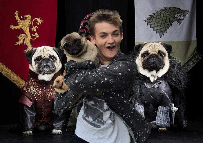 Game Of Pugs