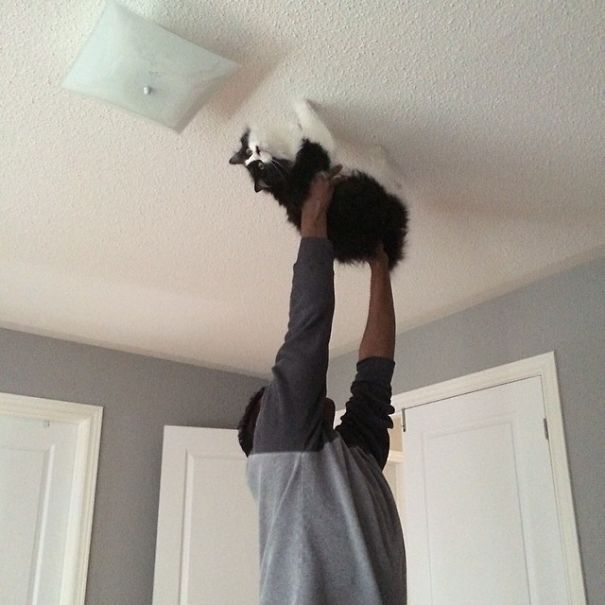 """Walked On My Husband Walking The Cat Across The Ceiling While Singing """"Spider Cat, Spider Cat, Does Whatever A Spider Cat Does"""""""