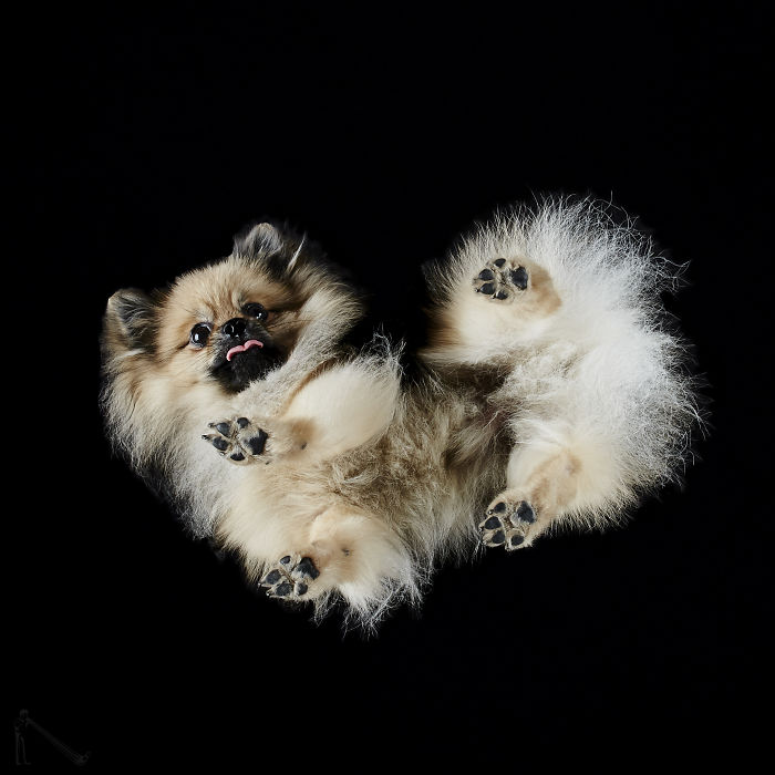 Under-dogs: I Photograph Dogs From Underneath