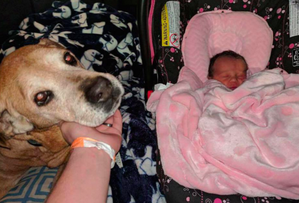 Old Dog Stays Alive Just Long Enough To Welcome His Baby Sister