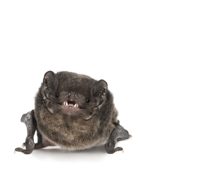 This Rescued Bat Smiles For The Camera