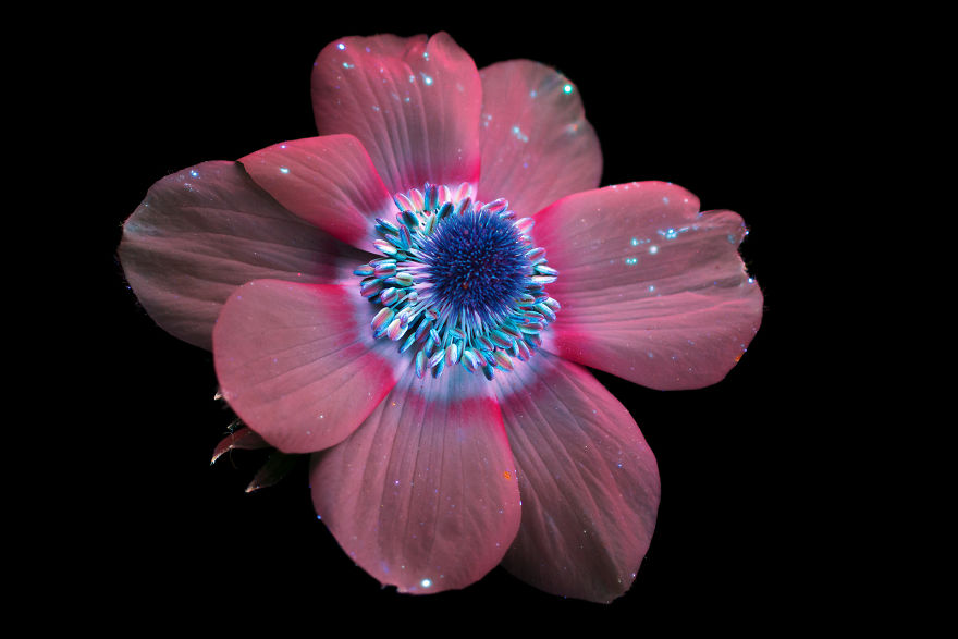 I Make Flowers Glow To Photograph Their Invisible Light