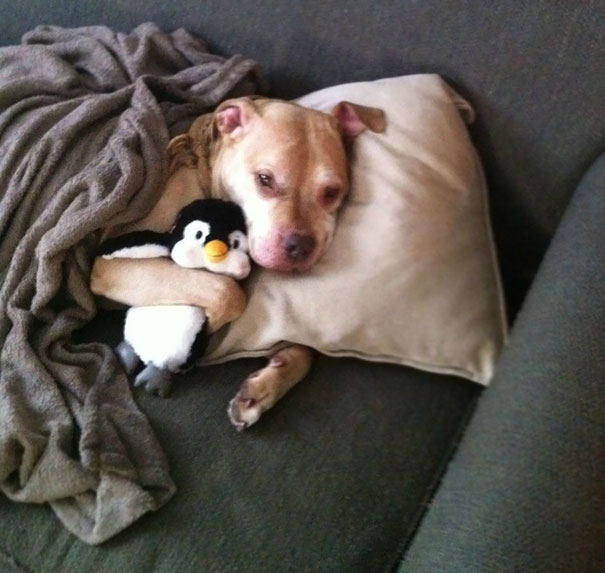 """A Dog Who Is Taking A """"Sick Day"""" To Spend More Time With His Penguin"""