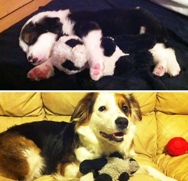 My Dog Then And Now