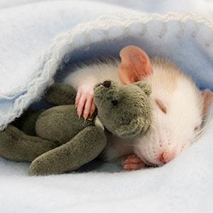 10+ Fotos de mascotas adorables durmiendo con sus juguetes