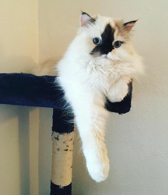 Meow You Doin? 😏